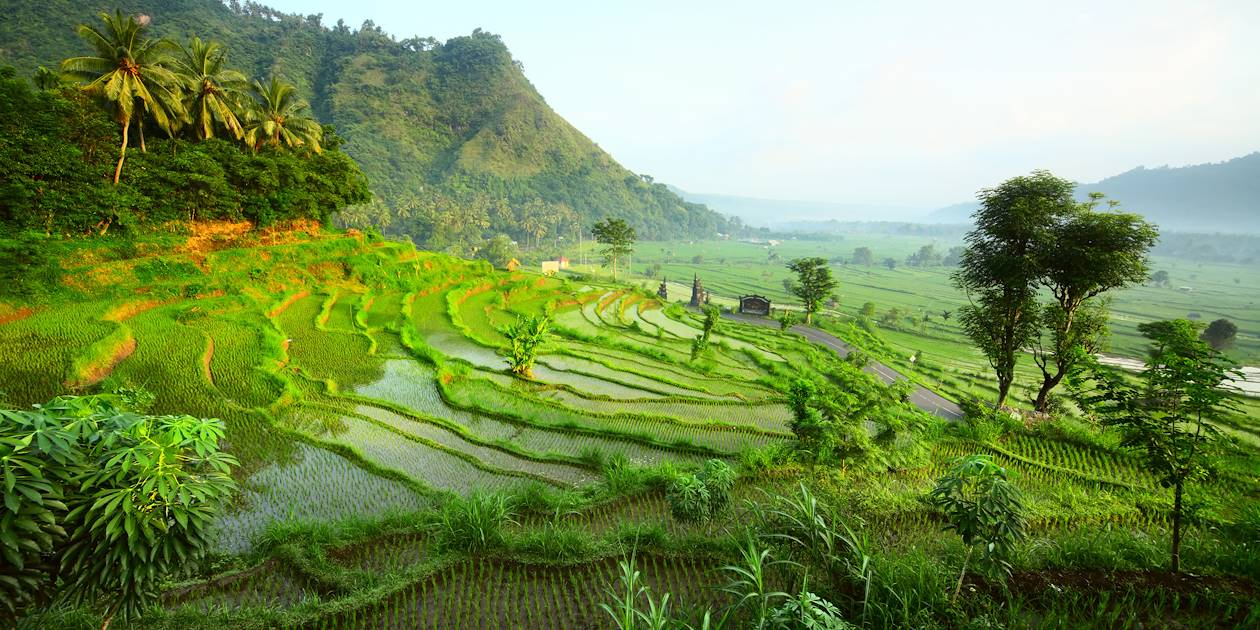 Rizières - Bali - Indonesie