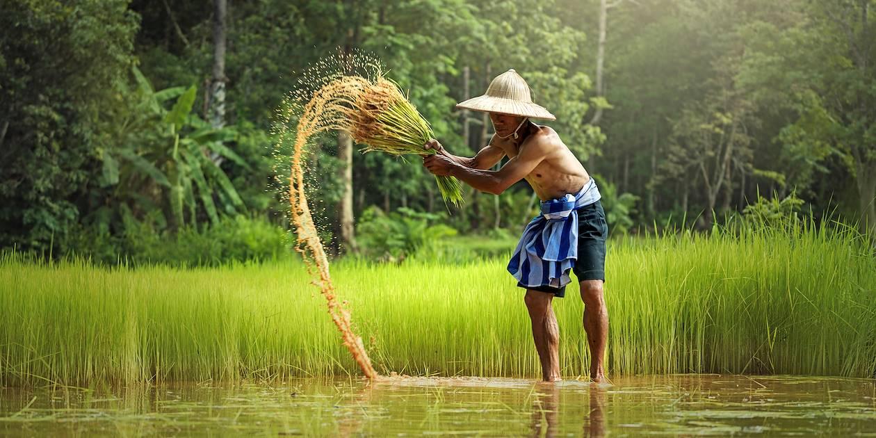 Fermier dans une rizière - Thaïlande