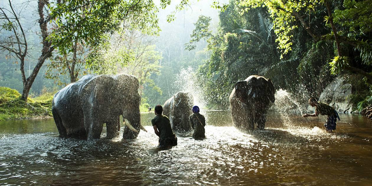 Baignade avec les éléphants - Laos