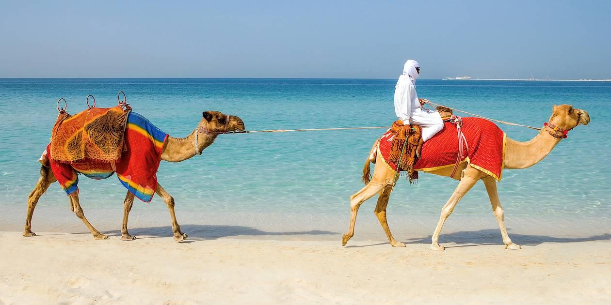 Chameaux sur la plage - Dubaï - Emirats Arabes Unis