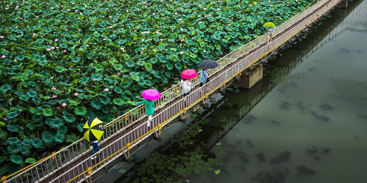 Pont suspendu dans le parc Deokjin à Jeonju - Corée du Sud