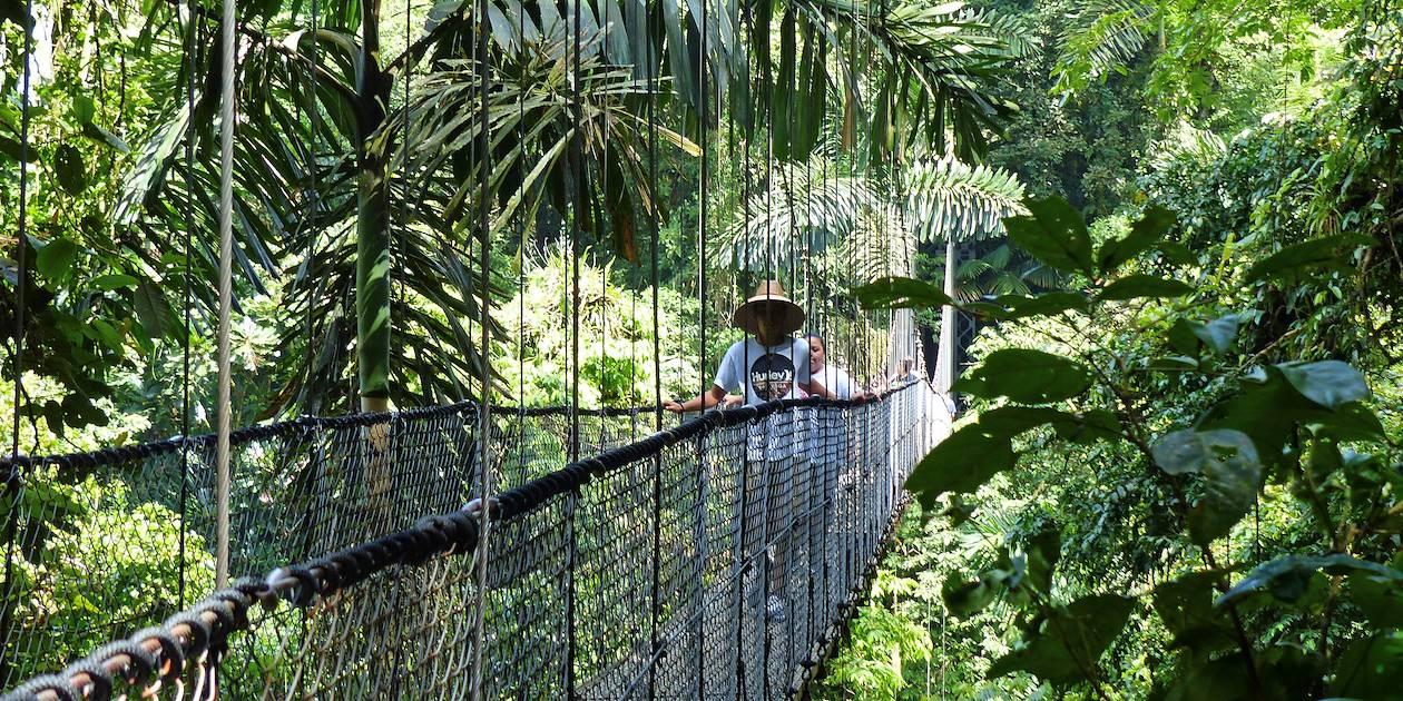Ponts suspendus dans la canopée - Arenal - Costa Rica