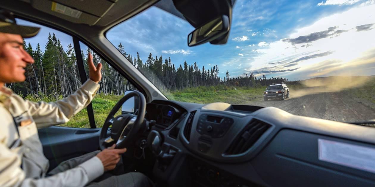 Observation de l'orignal en fin de journée - Matane - Québec - Canada
