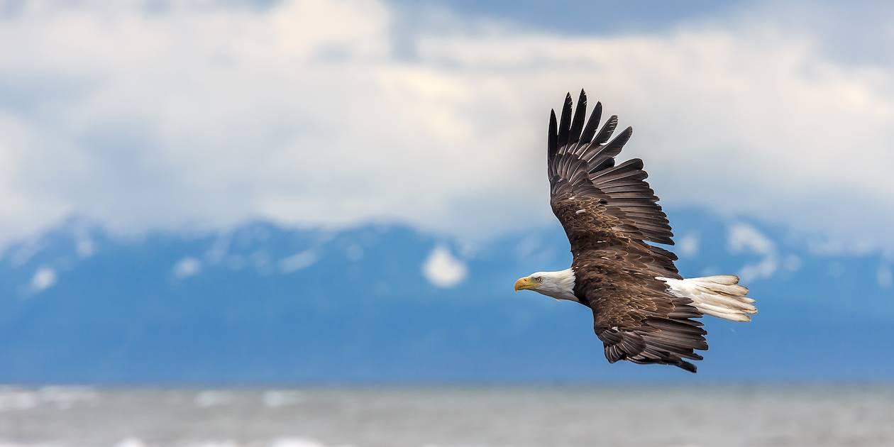 Aigle - Alaska - Etats-Unis