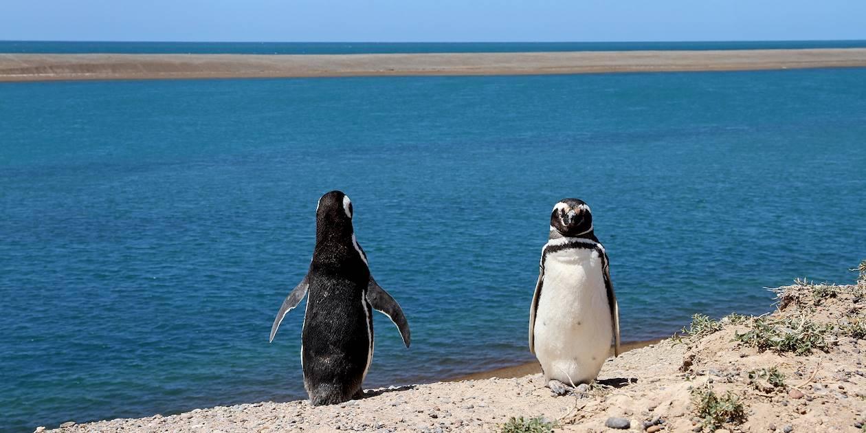 Manchots à Punta Tombo - Province de Chubut - Patagonie - Argentine