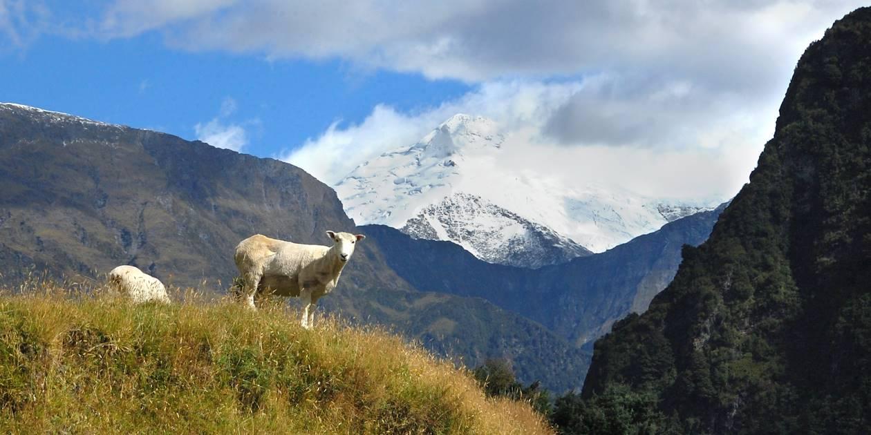 Mount Aspiring National Park - île du Sud - Nouvelle Zélande