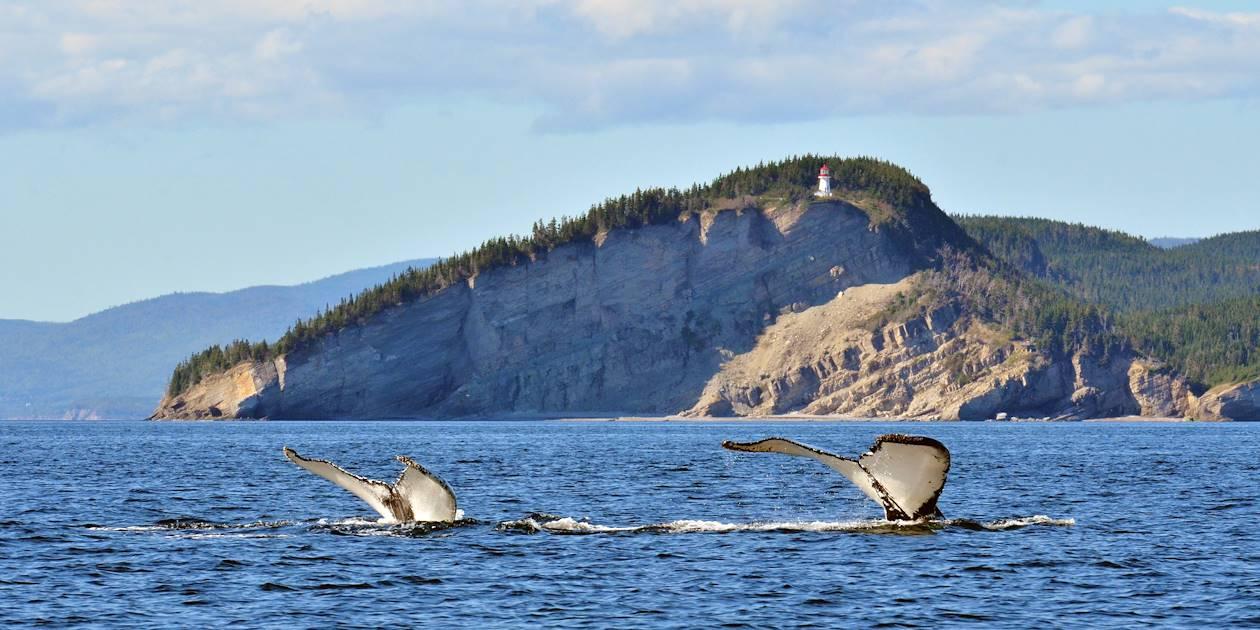 Baleines au large du cap Gaspé, dans le parc national du Canada Forillon - Québec