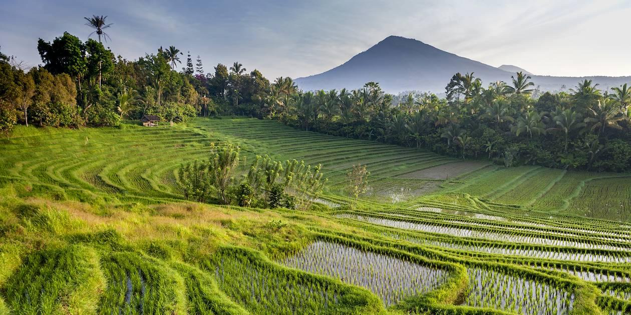 Belimbing - Bali - indonésie