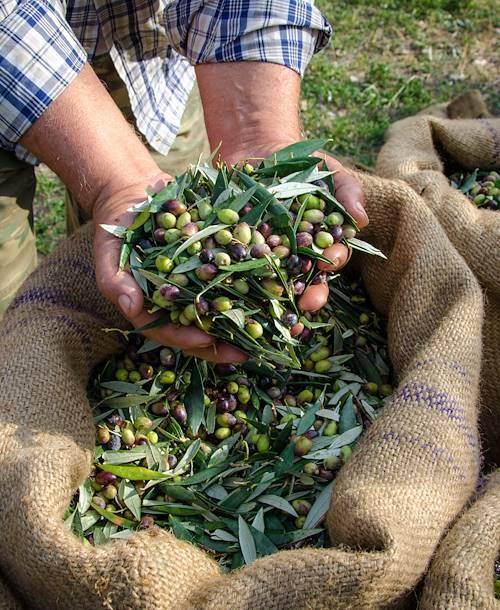 Olives fraîches - Île d'Amorgos - Grèce