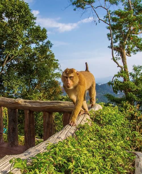 Singe curieux sur un balcon en bois - Thaïlande