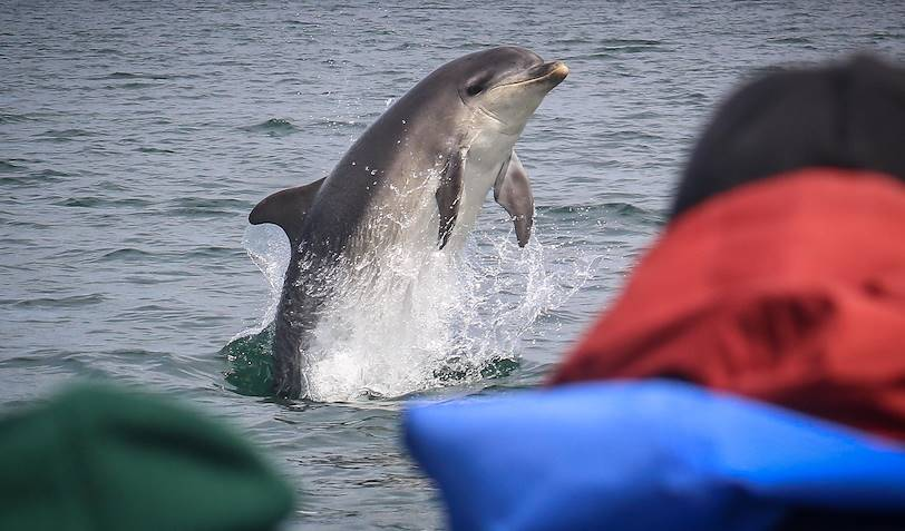 Observation des dauphins dans le Moray Firth - Cromarty - Ecosse - Royaume Uni