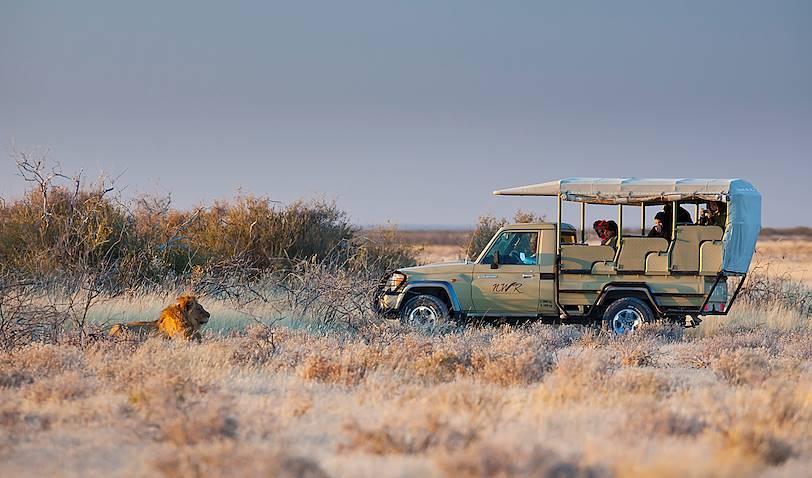 Faites équipe avec un ranger : safari en 4x4 dans le parc d'Etosha - Etosha Centre - Namibie