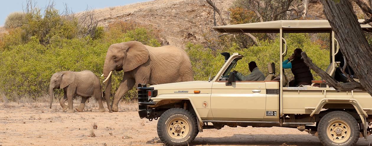 Mowani Mountain Camp - Les éléphants du désert - Twyfelfontein - Namibie