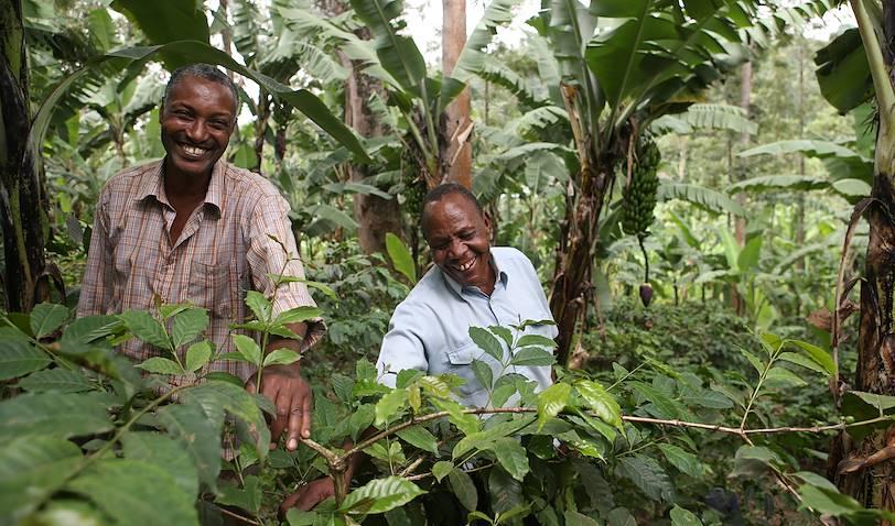 Découverte du café - Tanzanie