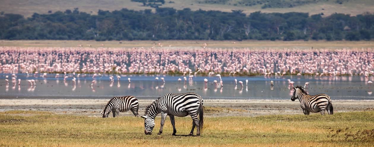 Faune dans l'aire de conservation du Ngorongoro - Tanzanie