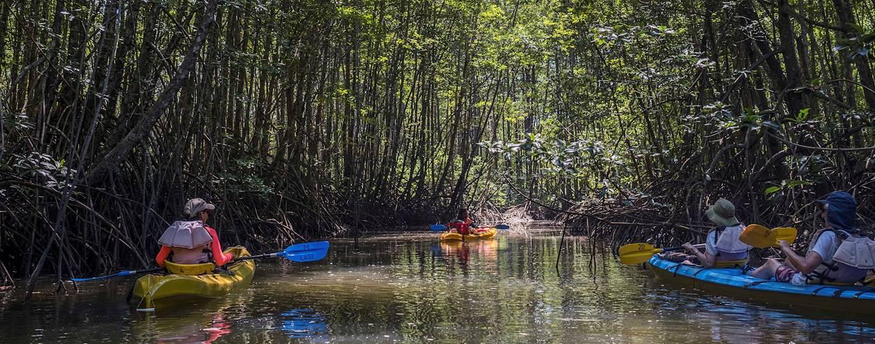 Balade en kayak à la découverte du Golfe Dulce et de ses mangroves - Puerto Jimenez - Péninsule de Osa - Costa Rica