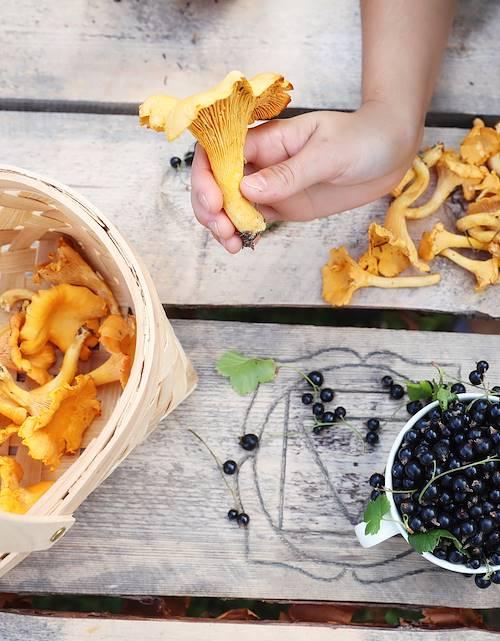Cueillette de champignons et de baies sauvages - Finlande