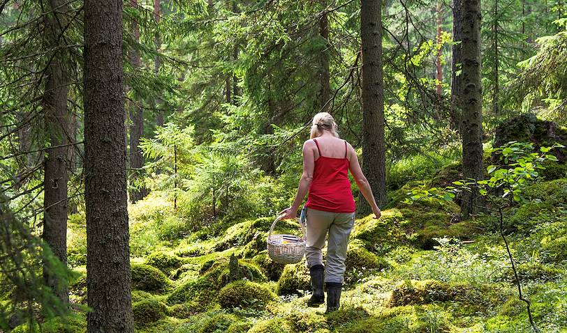 Cueillette de champignons et de baies sauvages - Rovaniemi - Laponie - Finlande