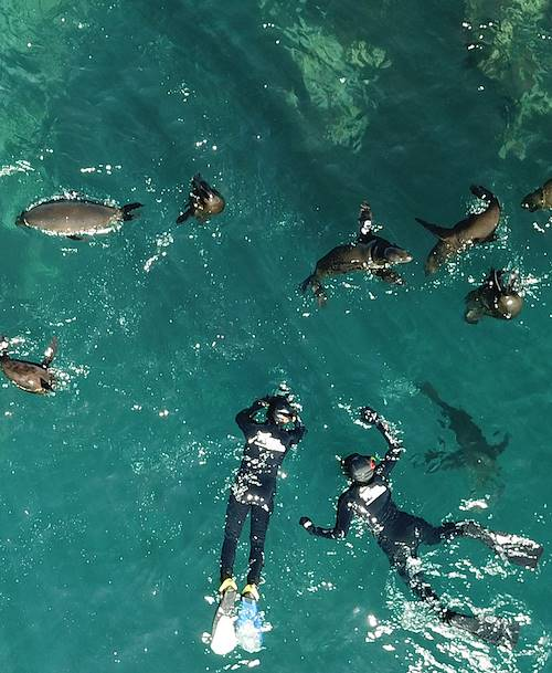 Plongée avec les otaries à fourrure du Cap - Afrique du Sud