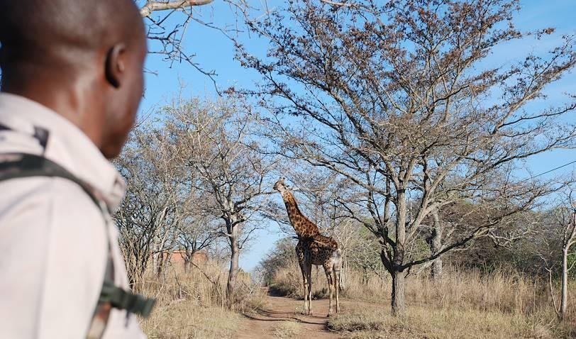 Réserve de Guernsey - Limpopo - Afrique du Sud