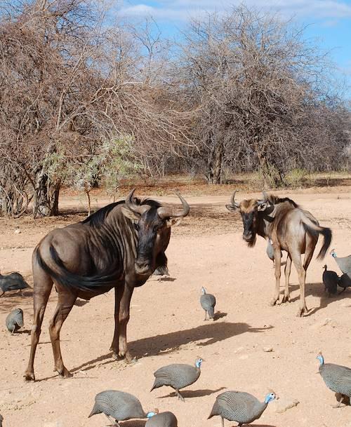 Réserve de Mopaya - Limpopo - Afrique du Sud