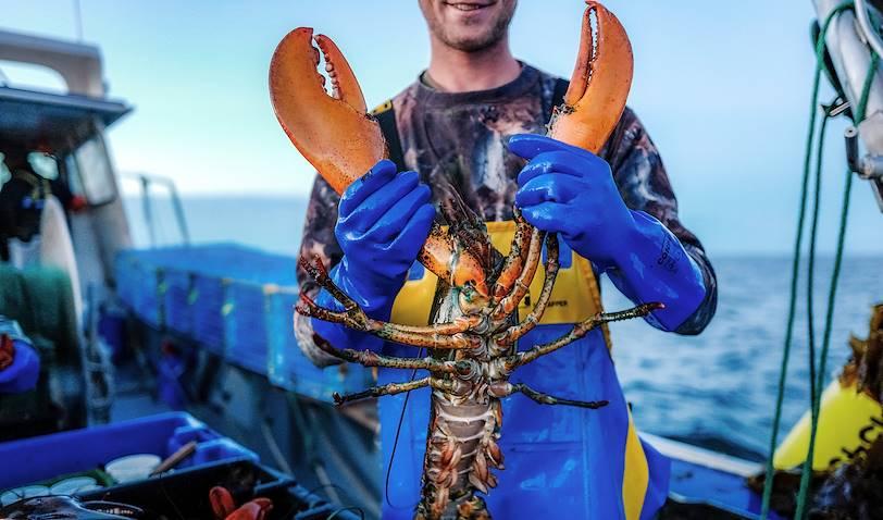 Pêche au homard à bord de l'Omirlou - Bonaventure - Québec - Canada