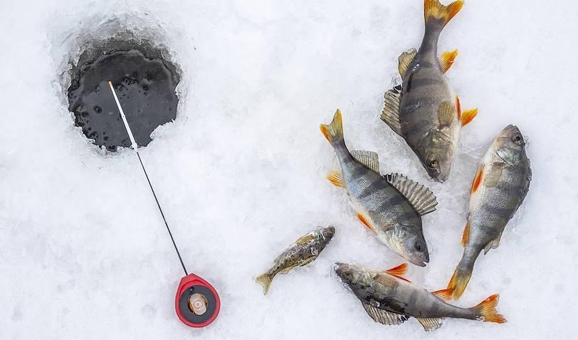 Pêche blanche - Canada