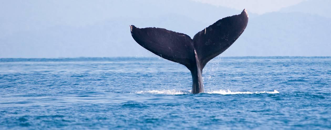 Baleine - Parc de los Quetzales - Costa Rica