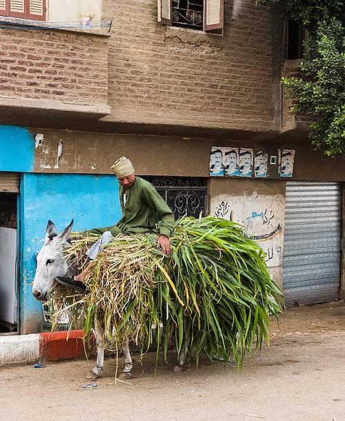 Scène de vie dans les rues de Louxor - Égypte
