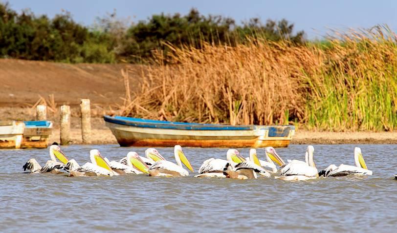 Réserve ornithologique du Djoudj - Saint Louis - Sénégal