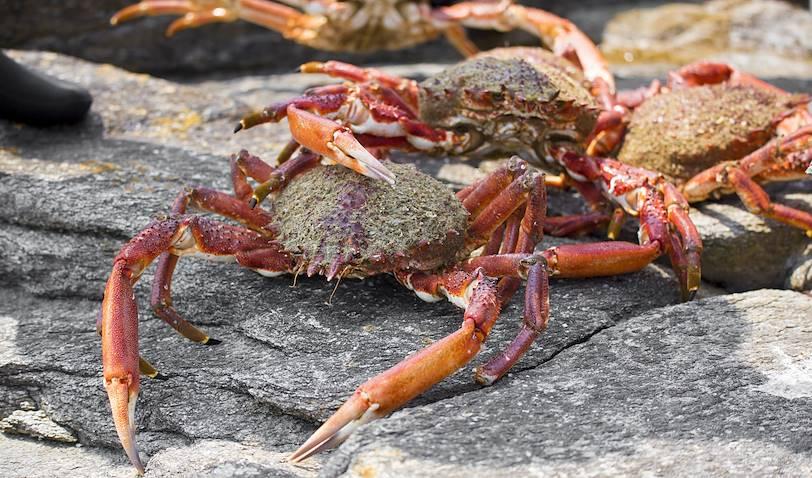 Pêche d'araignée de mer - Ushuaia - Argentine