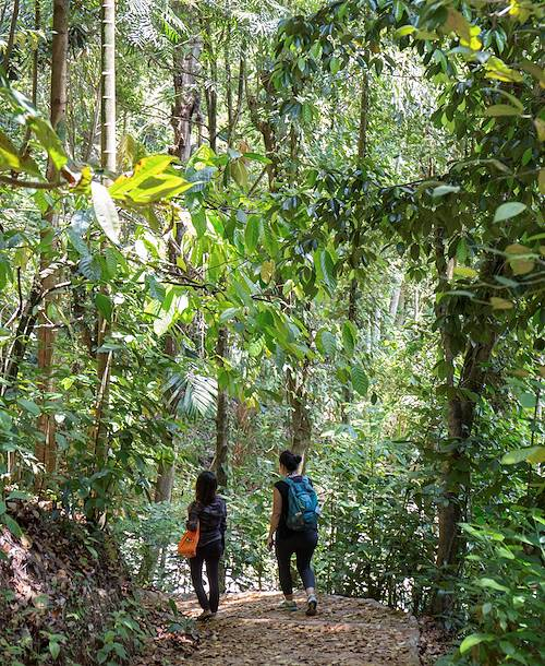 Randonnée avec un guide : découverte de la jungle et des paysages sur la route des cascades - Kandy - Centre - Sri Lanka