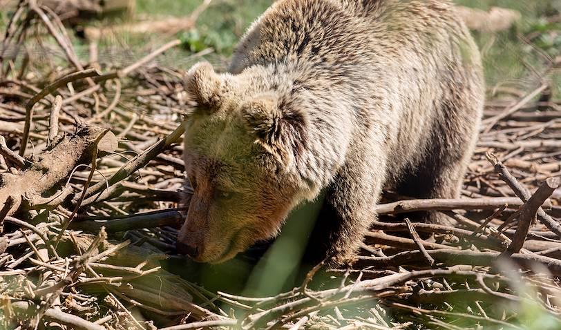 Le refuge des ours de Kuterevo - Croatie