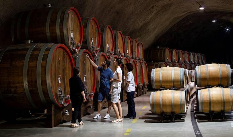 Les vignobles de Plantaze - Podgorica - Monténégro