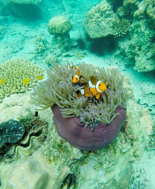 Faune marine autour des îles Daymaniyat - Oman