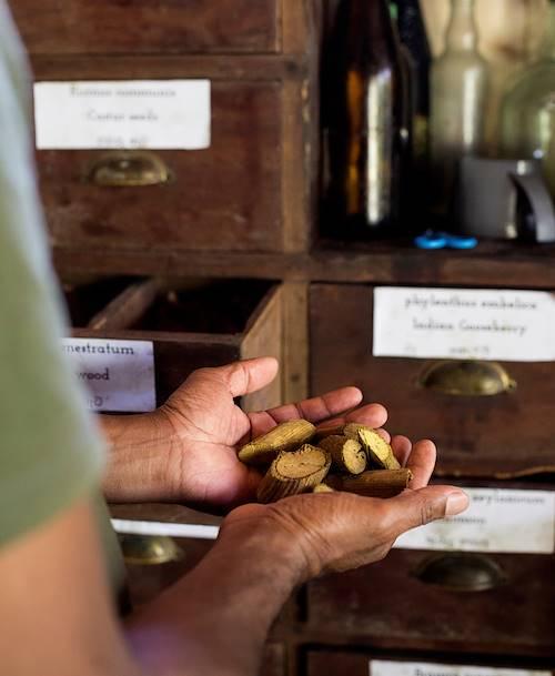 Choix des différentes plantes utiles à la préparation de l'huile - Kandy - Centre - Sri Lanka