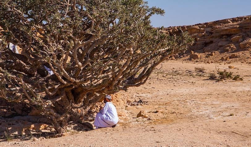 Récolte de la résine d'un arbre à encens - Jabal Dhofar - Oman