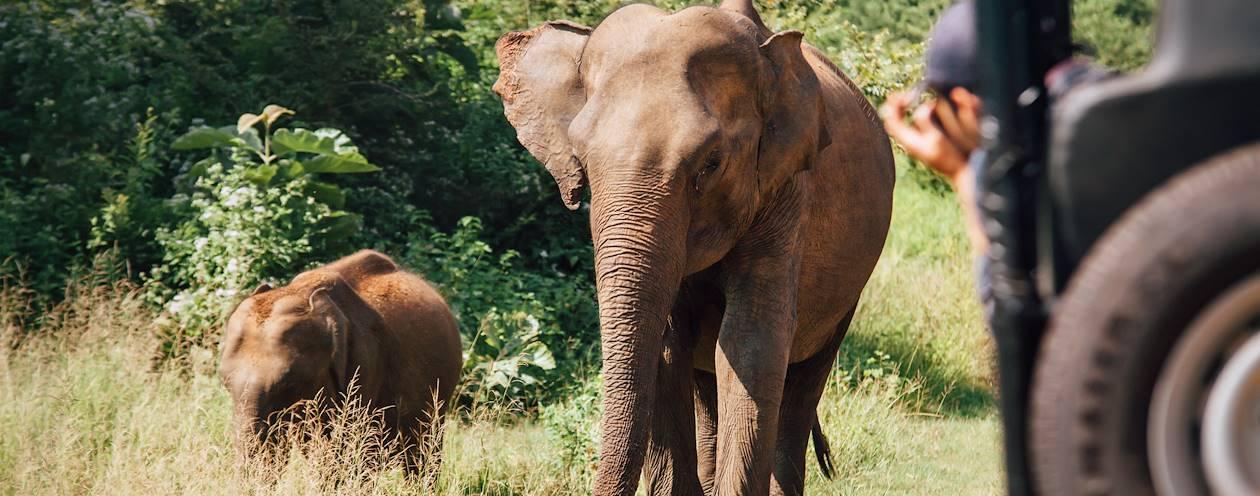 Safari en 4x4 dans le parc National d'Udawalawe - Udawalawa - Sri Lanka