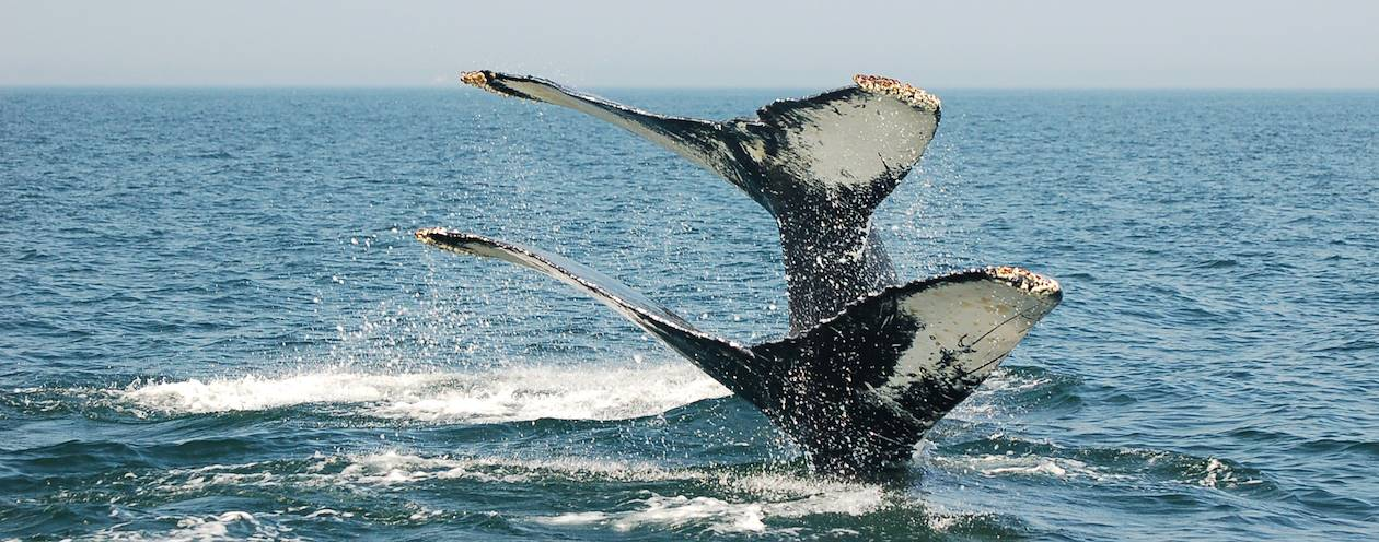 Baleines - Nouveau-Brunswick - Canada