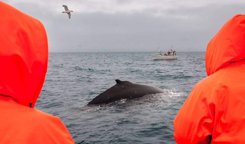 Observation des baleines - Baltimore - Comté de Cork - Irlande