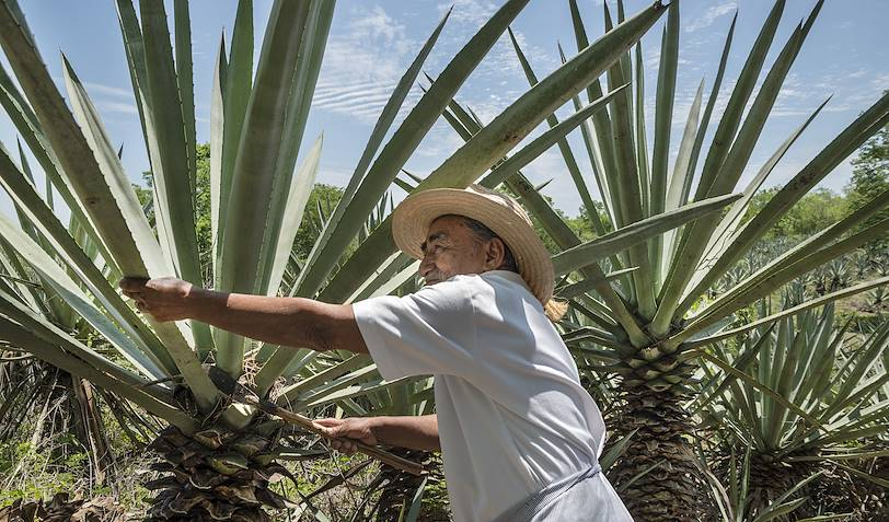 Fermier dans une plantation d'henequen - Merida - Mexique