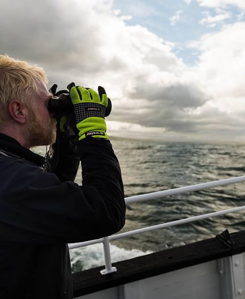 Observation des phoques - Hvammstangi - Islande