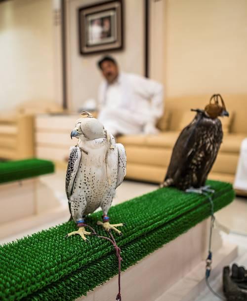 Visite de l'hôpital des faucons - Abou Dhabi - Emirats Arabes Unis