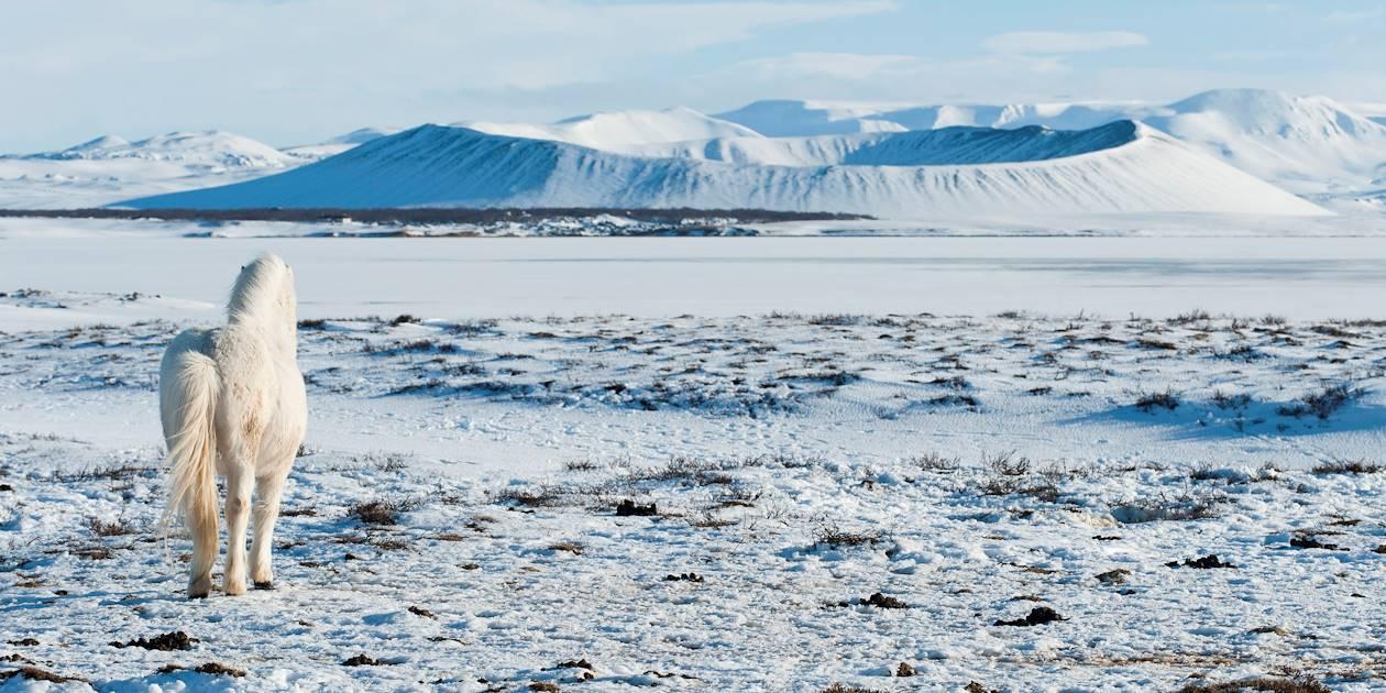 Un cheval blanc devant le cratère Hverfell enneigé - Myvatn - Islande