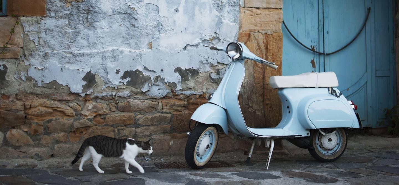 Chat curieux dans une rue - Italie