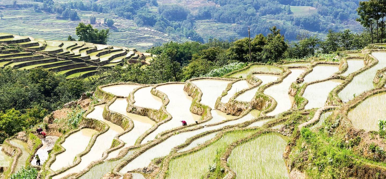 Rizières en terrasse des Hani de Honghe - Yuanyang - Province du Yunnan - Chine