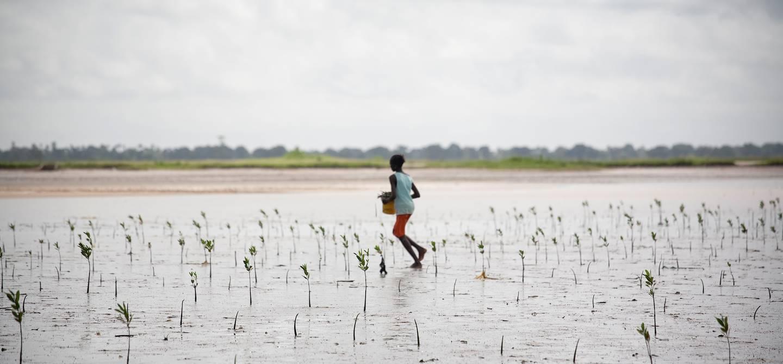 Sine Saloum - Sénégal