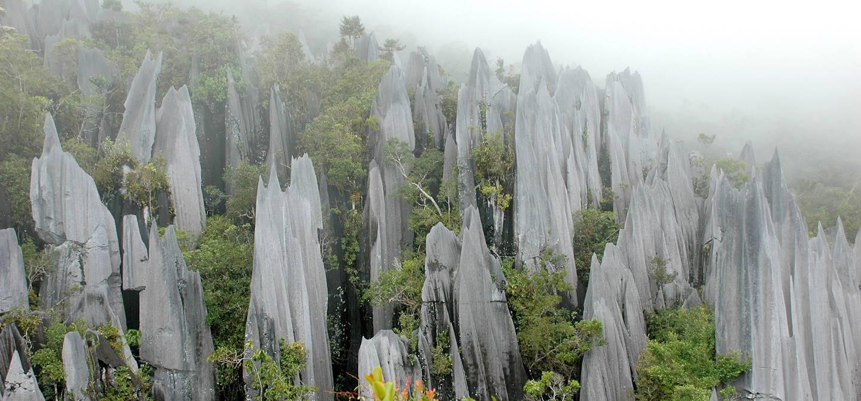 Parc National Gunung Mulu - Bornéo