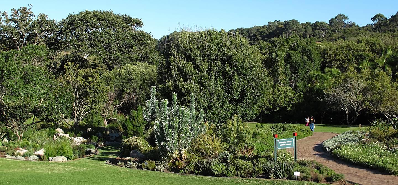 Jardin botanique national Kirstenbosch - Afrique du Sud