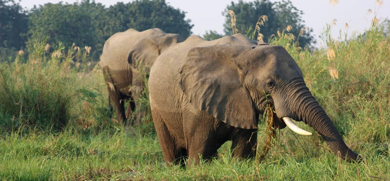 Elephants - Parc National du Zambeze - Zimbabwe